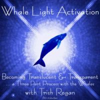 Whale Light Activation Process